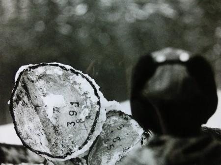 Autor číslo 21, Dřevorubci - Beskydy, seriál 1, 2010, 22 x 29 cm, fotografie